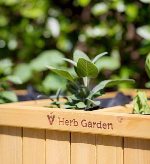 Herb Garden at Cogir of Vancouver, Washington