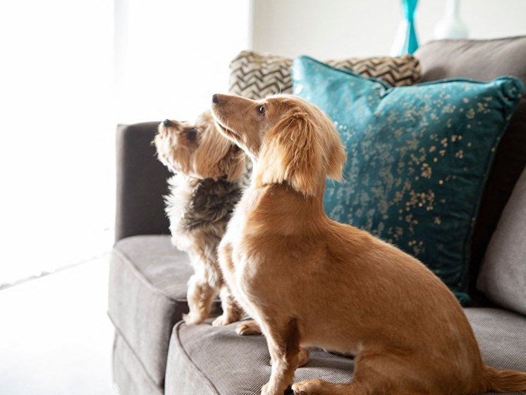 pets at  Compass at City Center Apartments