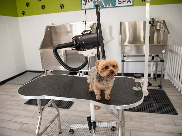 Spa table with small dog