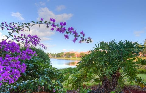 Flowers with Lake View