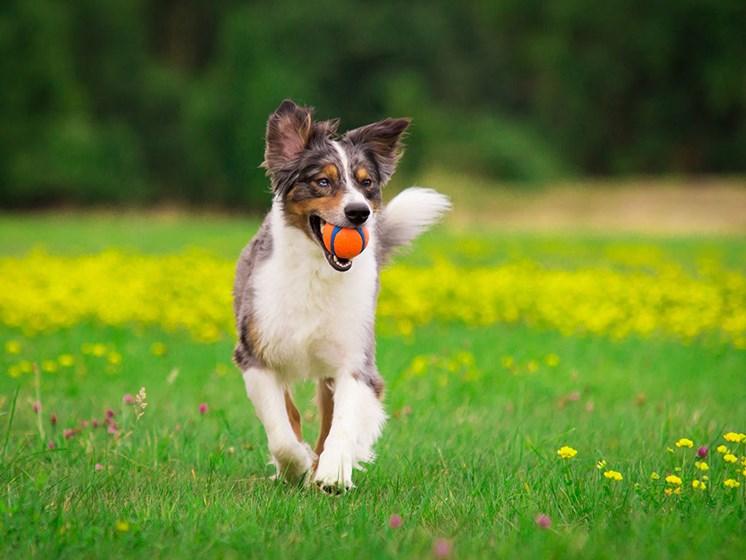 Dog Friendly Community at Link Apartments® Linden, Chapel Hill, NC