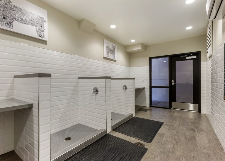 Dog wash station with multiple wash areas