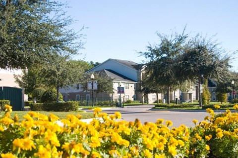 Close up of Yellow Flowers Along the Bottom of the Image with Building Exterior Parking Lot and Trees in the Background
