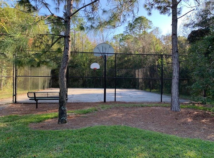Fenced in Basketball Court with Treeline in the Background