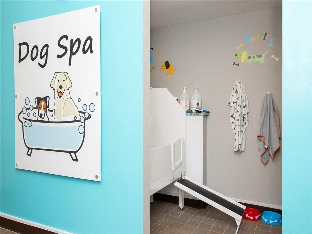 Dog Spa with Soap Towels and Decorations