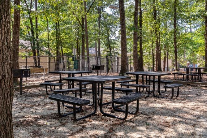 Shaded Outdoor Picnic Seating with Tall Trees