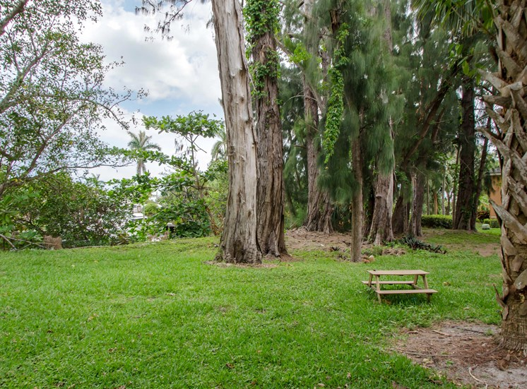 Picnic Area in open grass with mature trees