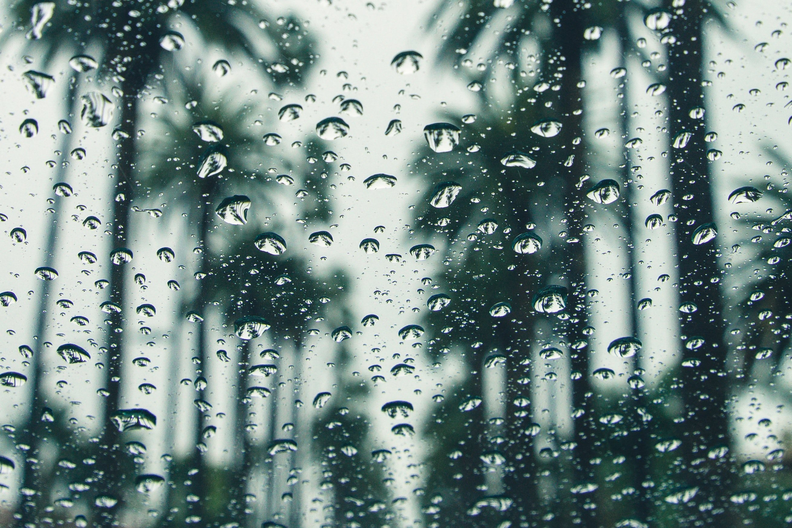 Stock Image of Window with Raindrops and out of Focus Palm Trees in the Background