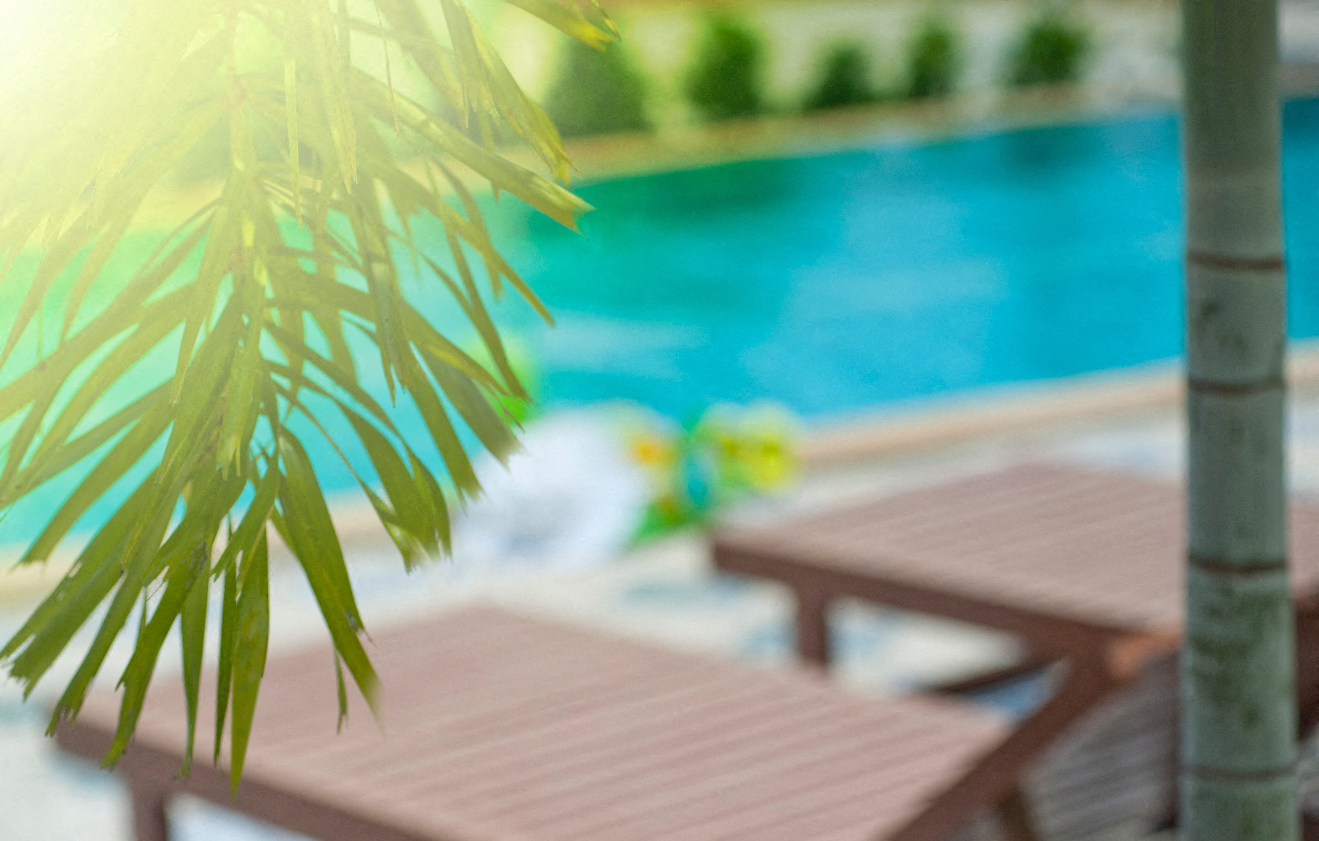 Stock Image of Palm Tree Over a Pool with Lounge Chairs