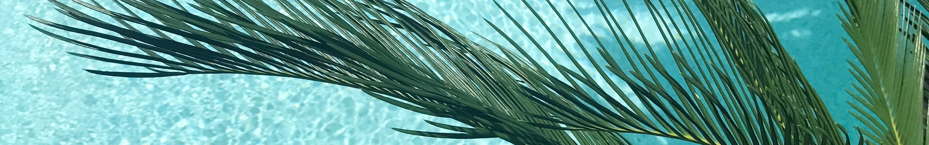 Stock Image of Palm Tree Over a Pool