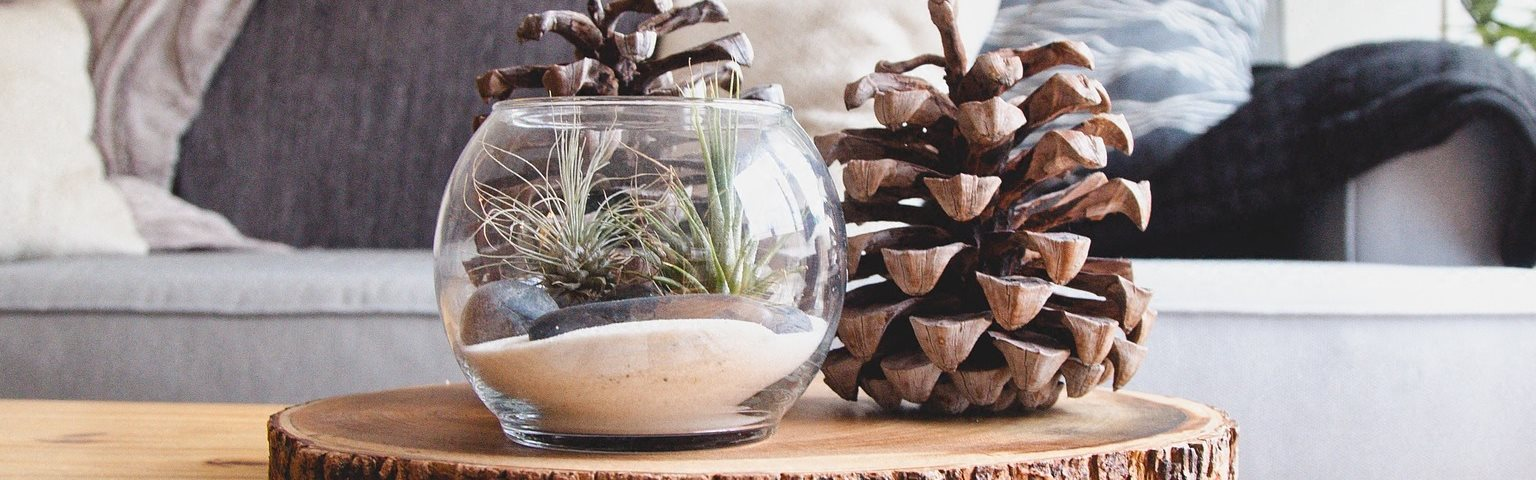 Stock Photo of Wood Coffee Table with Pine Cone and Sand Decorations  on Rug in Front of Grey Couch Under Lamp and Palm Tree art