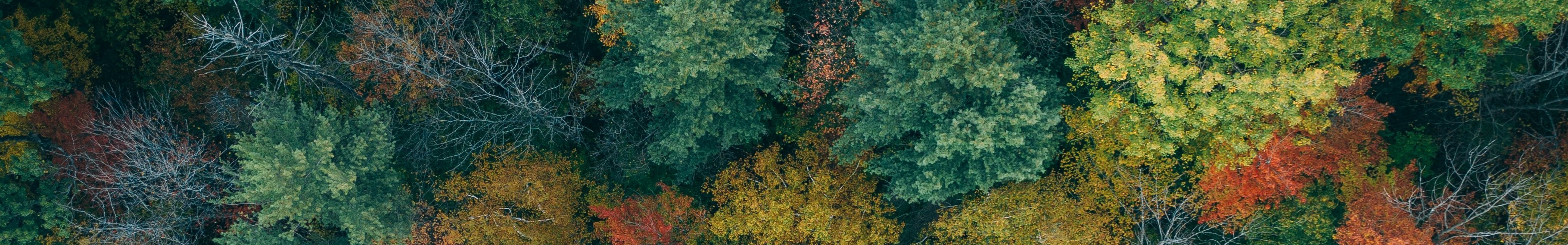 Stock Image Aerial View Over North Carolina Woods with Green Yellow and Orange Leaves