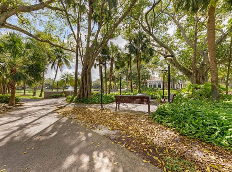 Scenic Walking Trail Shaded by Trees with a Bench