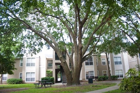 Large Tree Shading Walkway and Picnic Table in Front of Building Exterior