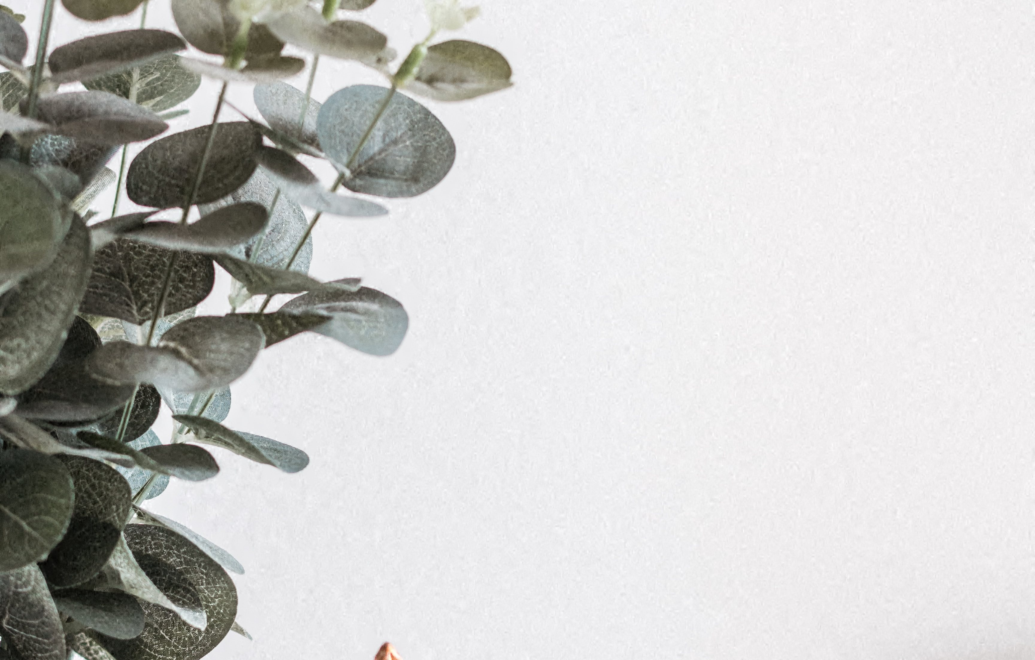 Stock Image of Desk Plant on White Surface with Gold Geometric Wire Decoration