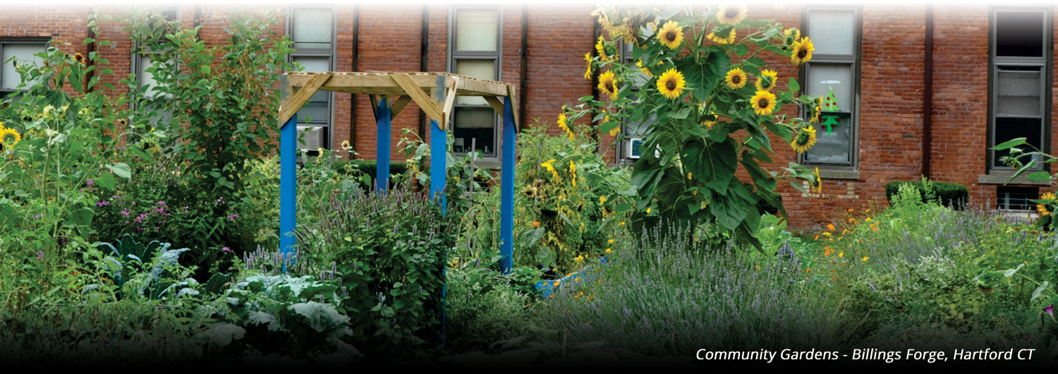 Community Gardens - Billings Forge, Hartford CT