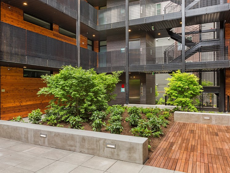 Courtyard With Greenery at Shelton Eastlake apartments in Seattle, Washington