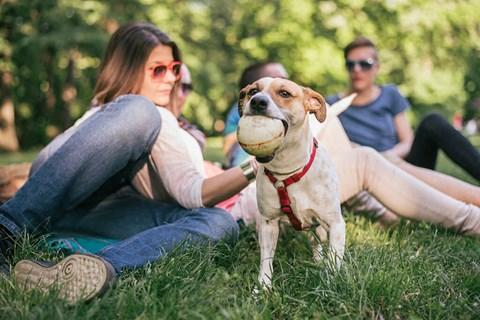 Leash-Free Pet Park And Pet Spa at Alta Croft, North Carolina, 28269