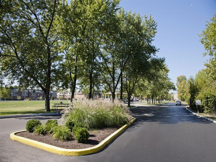 Mature Trees Along Road Side at Lawrence Landing, Indianapolis, IN