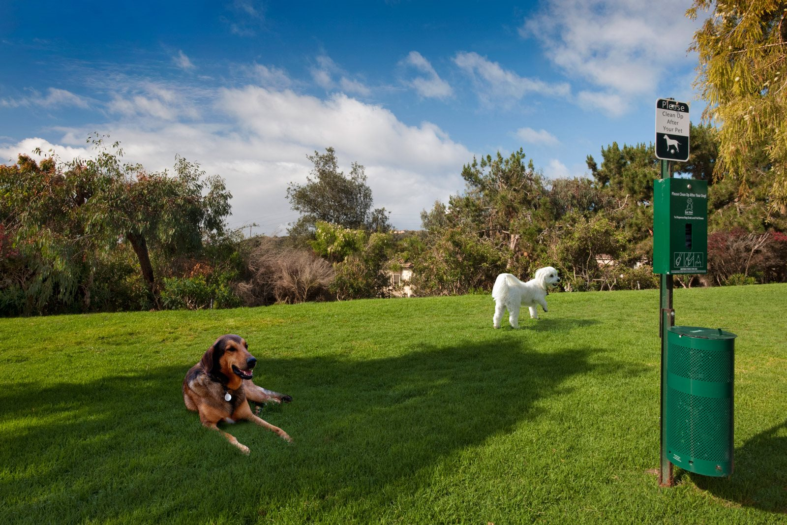 Green Spaces in Pet-Friendly Community at Windsor at Aviara, Carlsbad, CA