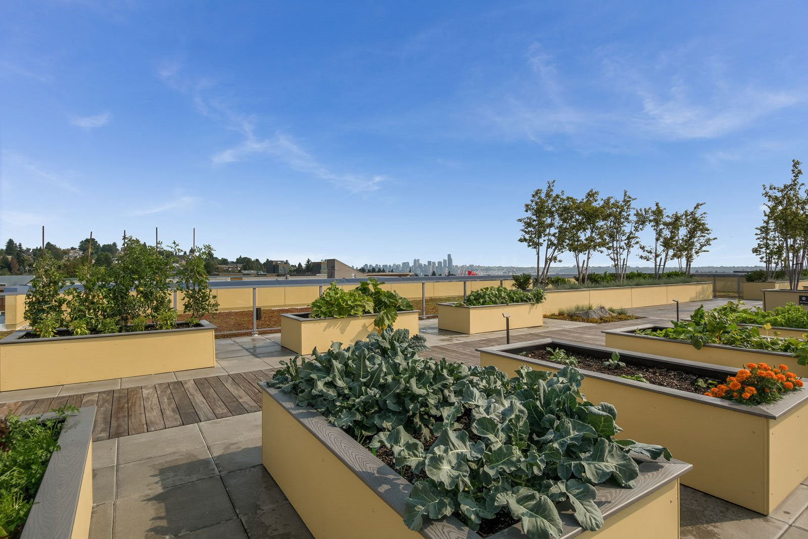 Rooftop Community Garden with Gorgeous Views at The Whittaker, 4755 Fauntleroy Way, Seattle