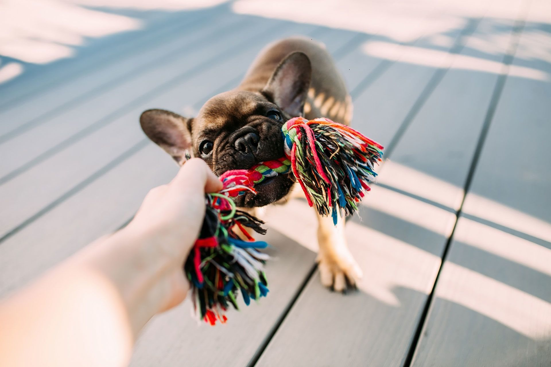 Pet-Friendly Apartment Community with Pet Park at Windsor Burnet, Texas, 78758