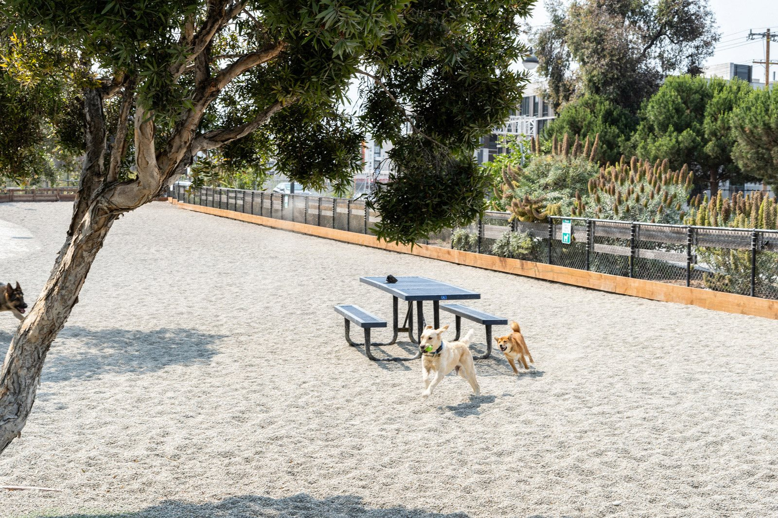 Pet-Friendly Apartment Community at Mission Bay by Windsor, 360 Berry Street, San Francisco