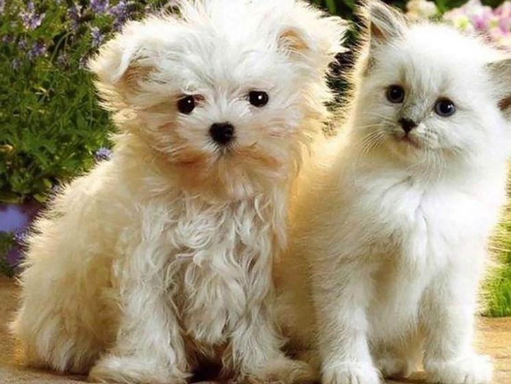 white puppy and kitten sitting down_Northpark at Scott Carver Apartments Miami, FL