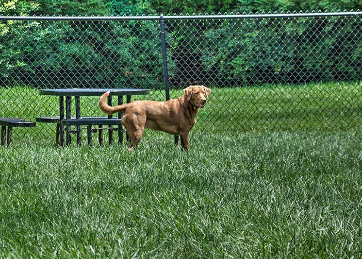 Dog Park at Abberly Green Apartment Homes by HHHunt, Mooresville