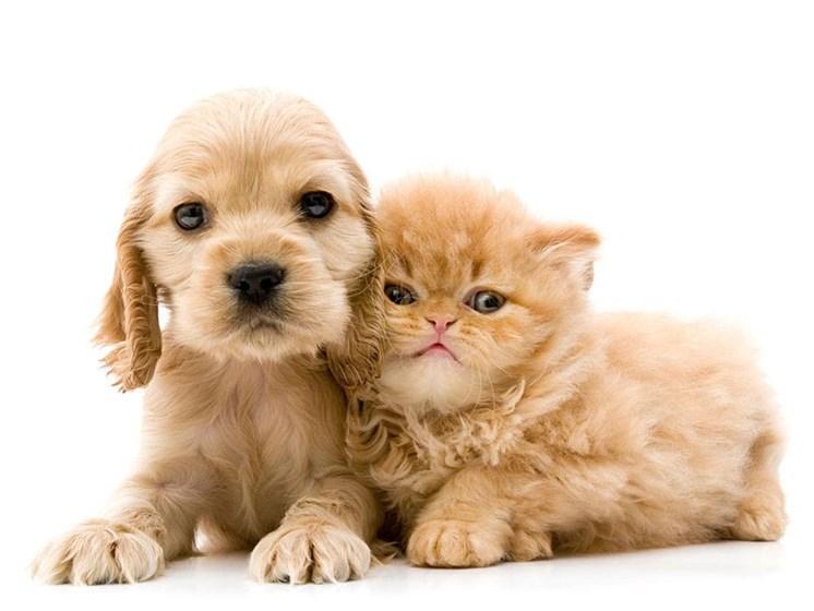 Dog-and-Cat at Hickory Village Apartments, Mishawaka, IN, 46545