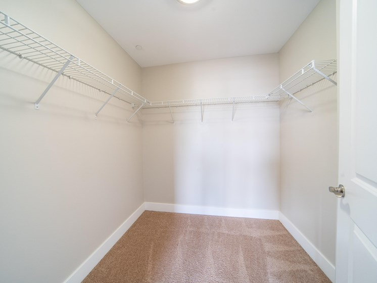 Walk in closet with white wire shelving, plush carpeting, and cream walls.