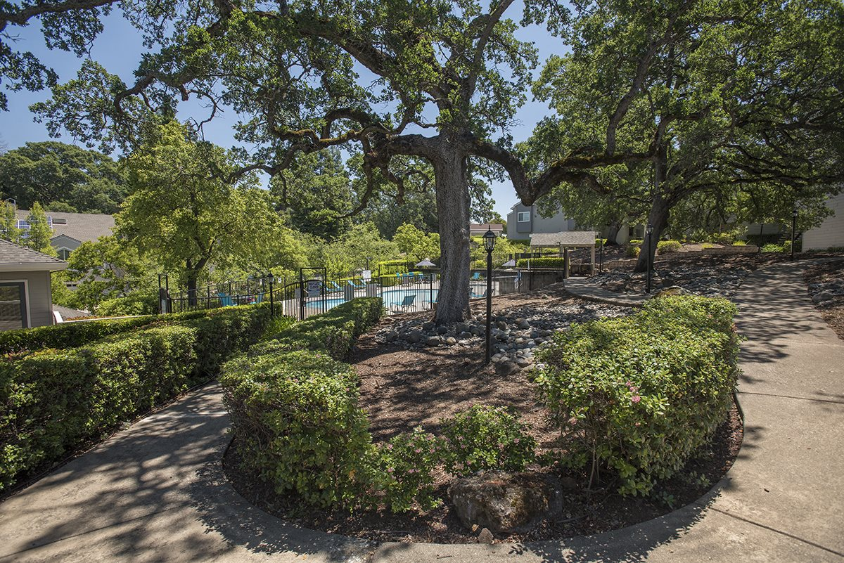 Rocklin Gold Sidewalk Landscaping