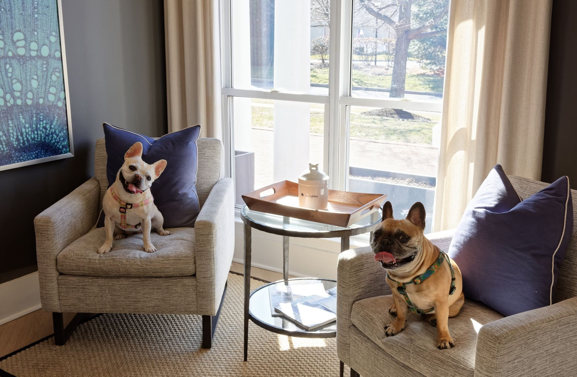 Berkshire Stewards Crossing Pet Friendly Apartments in Lawrenceville NJ. between Princeton and Trenton, easy access to Hamilton Train Station, I-95, NJ Turnpike,  1000 Stewards Crossing Way, Lawrenceville NJ 08648