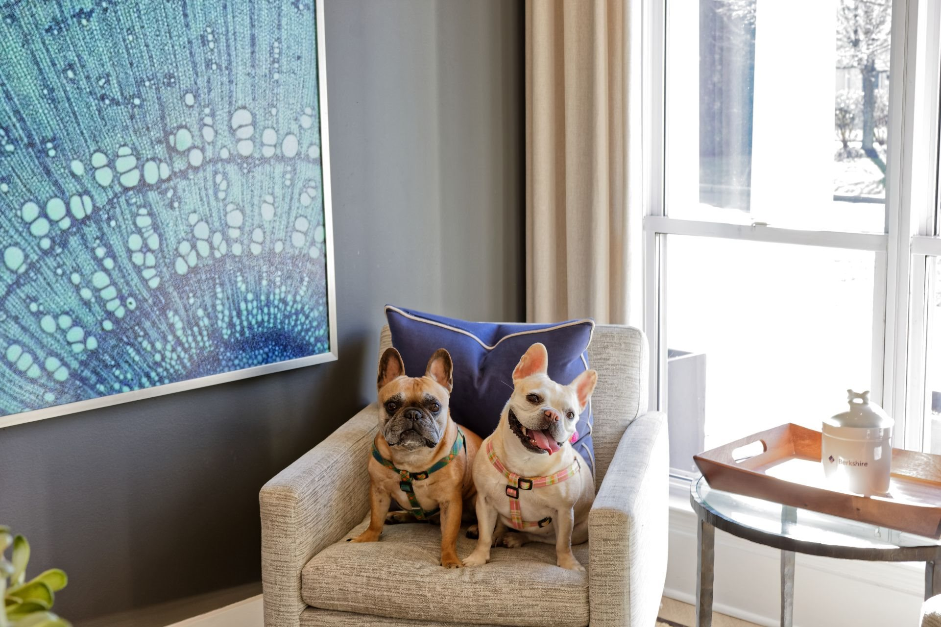 Pet Friendly, Newly Renovated 1, 2 and 3 Bedroom Apartments in Lawrenceville NJ-1000 Steward Crossing Way Lawrenceville NJ 08646-Dog Park, Large Pets Welcome,  No Weight Limit