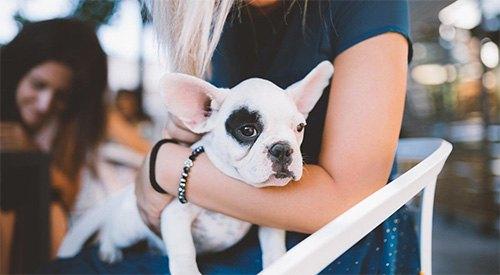 Pet-friendly-img