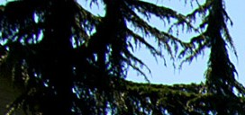 Landscaping at Black Lake Apartment Homes, Olympia, WA