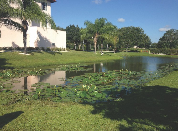 Holy Cross Manor I and II senior apartments in Palmetto, FL pretty pond with lily pads