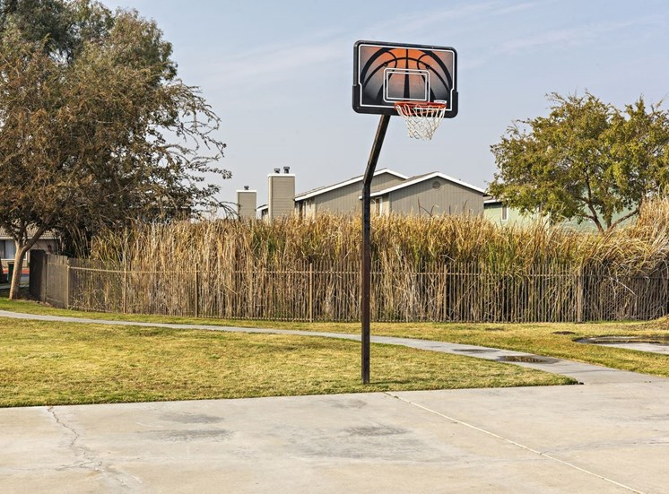Basketball Court and Hoop