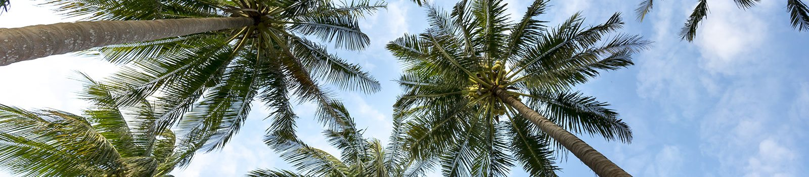 Palm trees_Riverwalk II Apartments, Homestead, FL