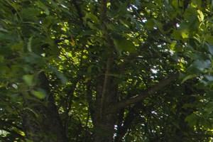 Foxborough photogallery 25