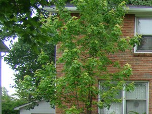 281 Sundridge Drive 3 Beds Apartment for Rent Photo Gallery 1