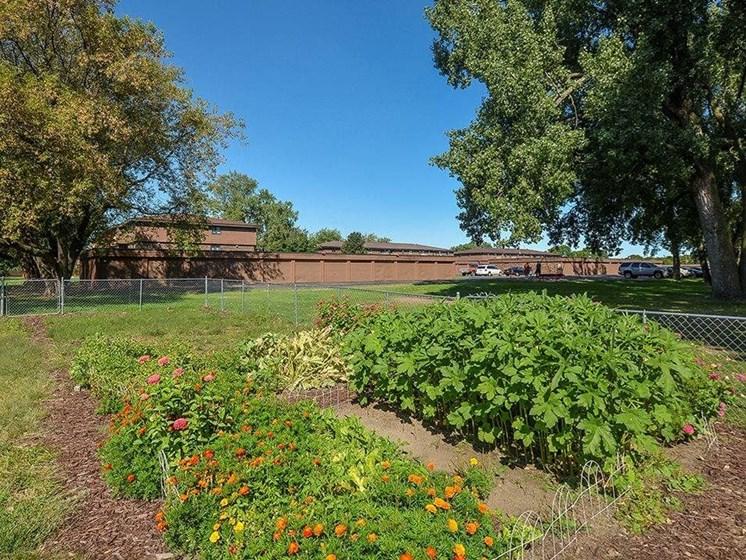 Community garden in Uppertown apartments