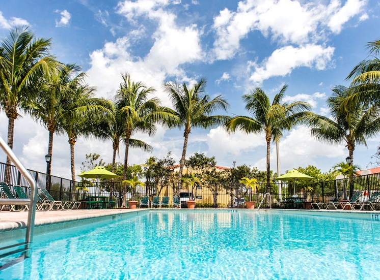 soaring palms overlooking our Hollywood, FL apartments pool