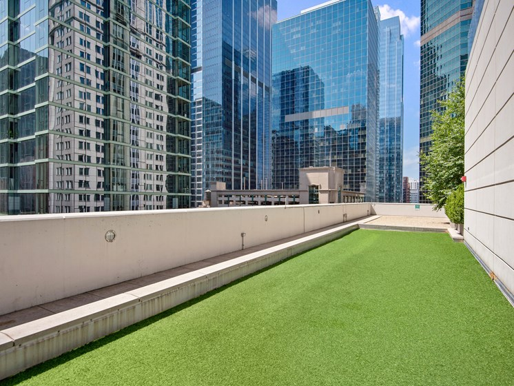 Rooftop dog run with artificial grass