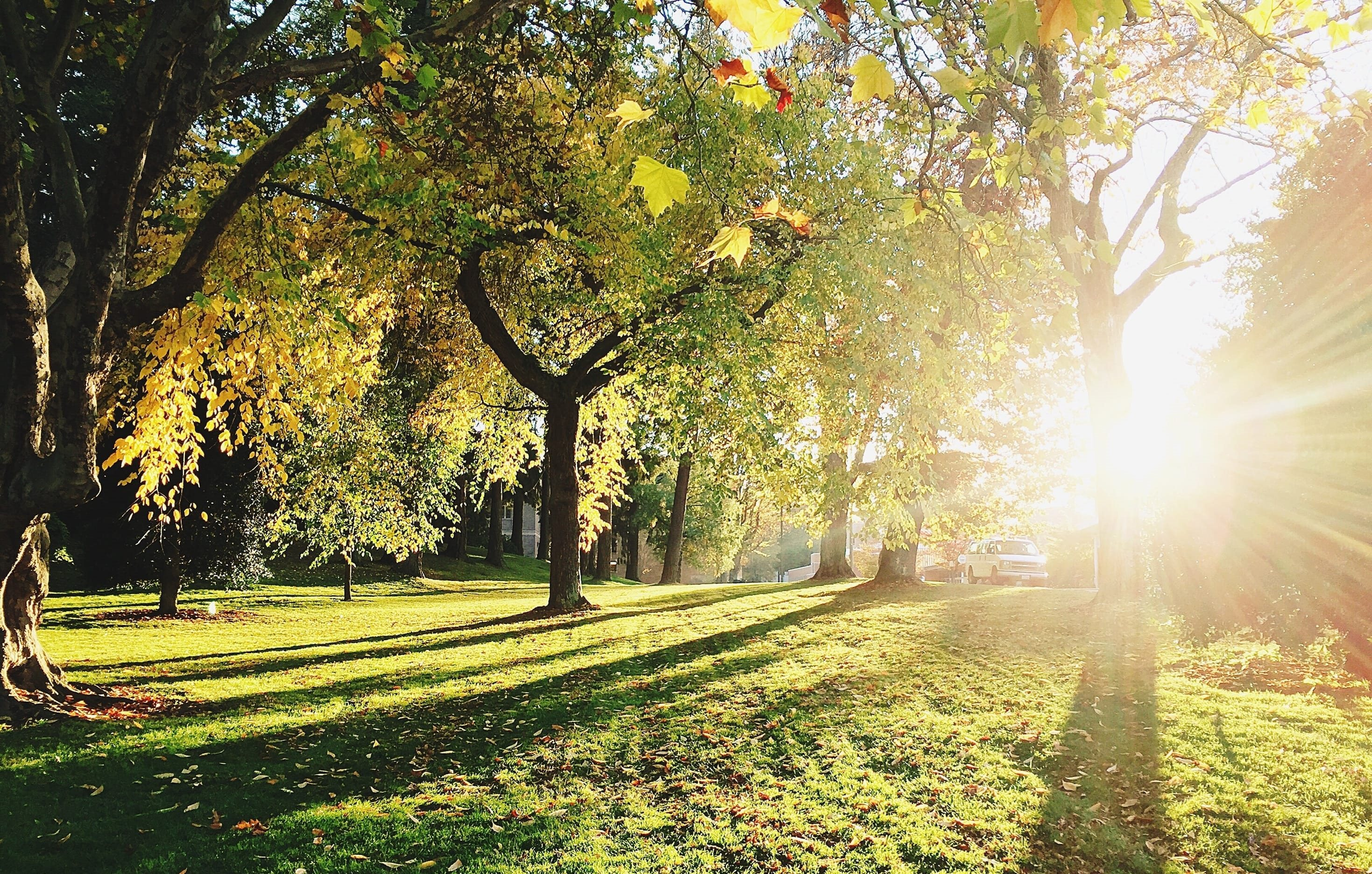Trees with Sunshine