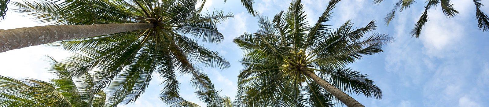 Palm trees_Valencia Park Orlando, FL