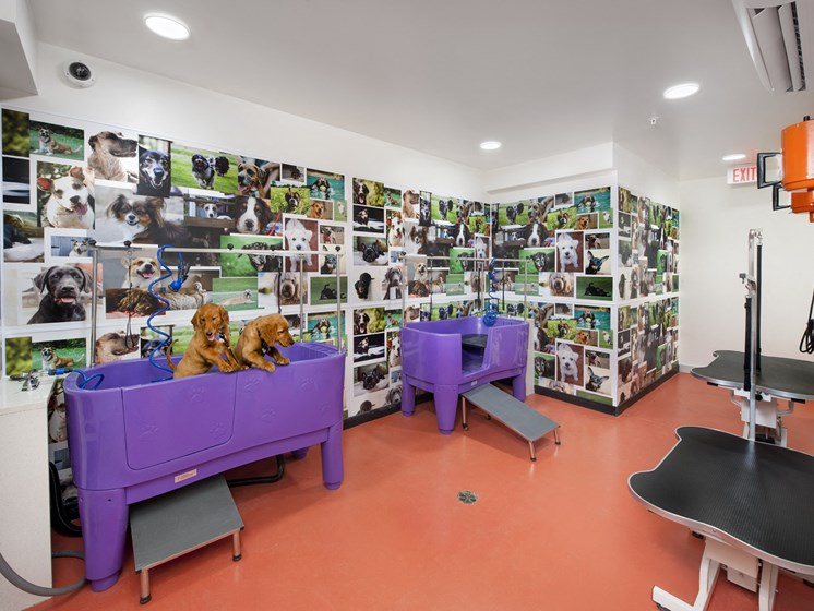 Luxury Pet Spa with Two Bath Areas with Steps for Easy Access Plus Grooming Tables at Park 35 on Clairmont Apartment Homes, 3500 Clairmont Ave. Birmingham, AL 35222