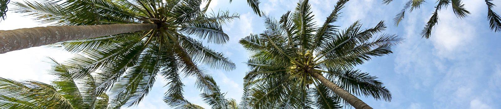 Palm Trees_Brownsville Village I, Miami, FL 33142