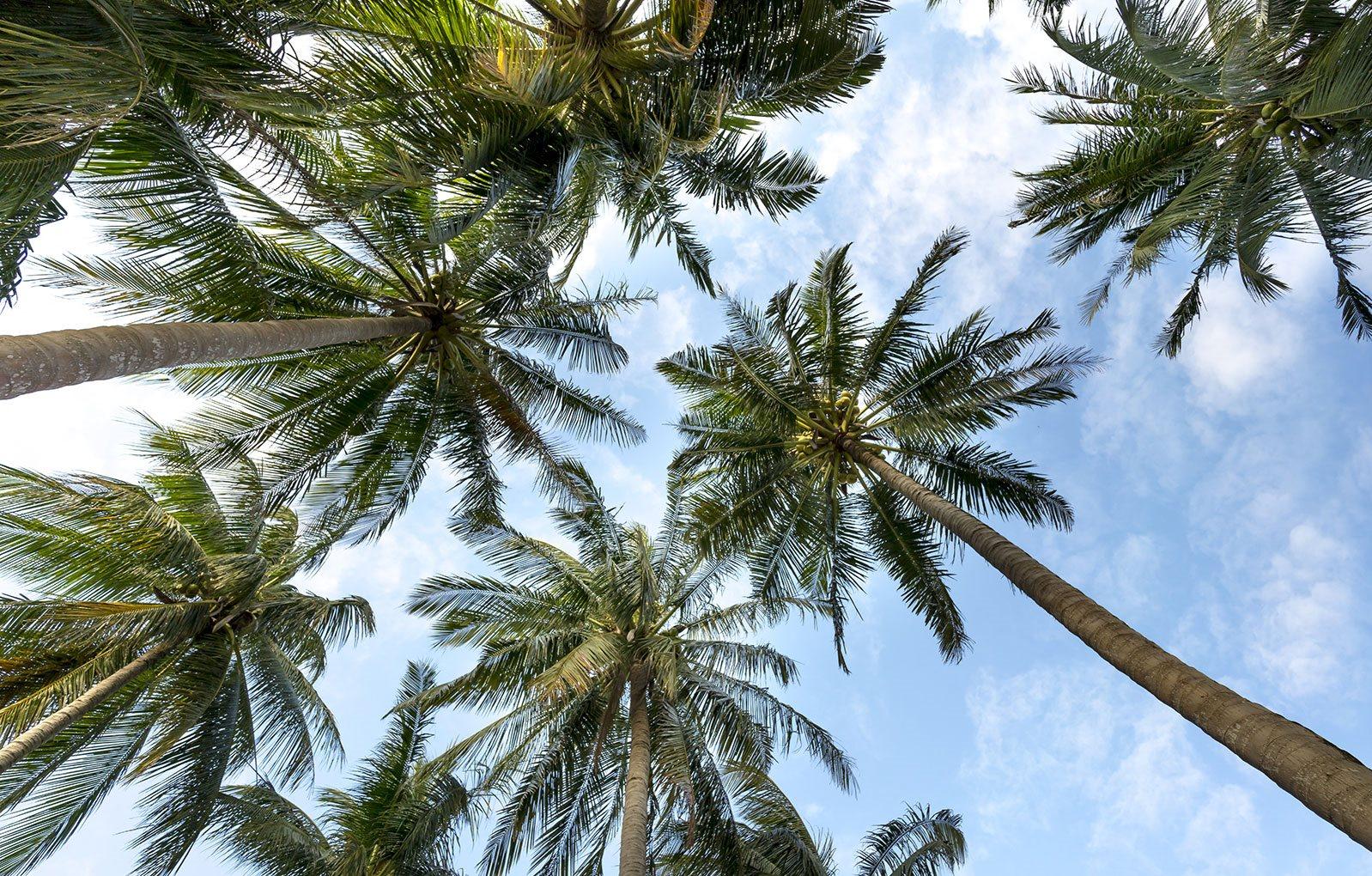 Palm Trees_Brownsville Village II, Miami, FL 33142
