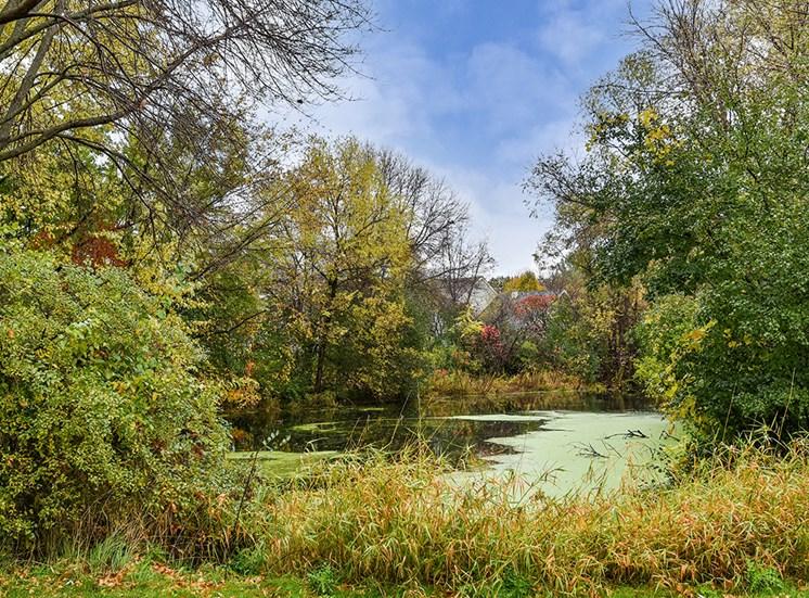 Birch Lake Townhomes - Pond